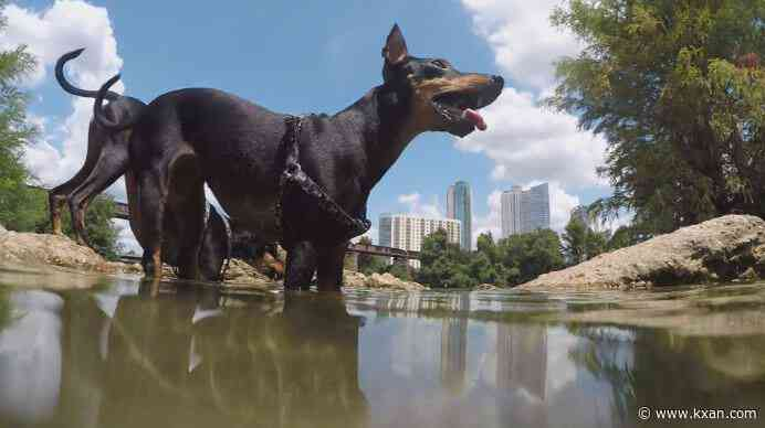 Harmful algae detected around Red Bud Isle, city warns dog owners about risks