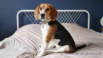 L'incroyable mobilisation pour retrouver le chien Truffe, disparu à Lambersart - La Voix du Nord