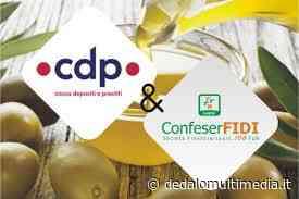 Scicli (Rg)– ConfeserFidi: Campagna olearia per 140 milioni - dedalomultimedia.it