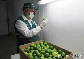 Perú: Región de San Martín busca realizar exportaciones de limón - PortalPortuario