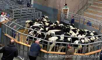 Strong dairy trade at Stirling UA - The Scottish Farmer