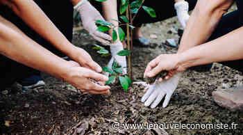 Politique de l'arbre en Seine-Saint-Denis - Le nouvel Economiste
