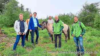 Baiersbronn: Kleine Pferde als Helfer auf den Grinden - Baiersbronn - Schwarzwälder Bote