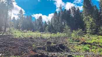 Baiersbronn: Geld in Zukunft eher im Hintergrund - Baiersbronn - Schwarzwälder Bote