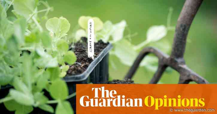 My allotment was once a casual hobby. Since lockdown, it's become a lifeline | Alice O'Keefe