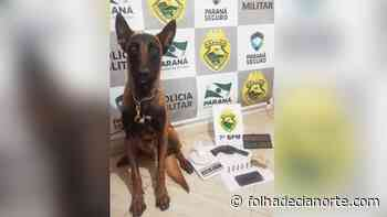 Equipe Operações com Cães de Cianorte auxilia ação em Goioerê - Folha De Cianorte