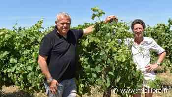 Gard : à Saint-Gilles, sous les galets… le rêve de Diane - Midi Libre