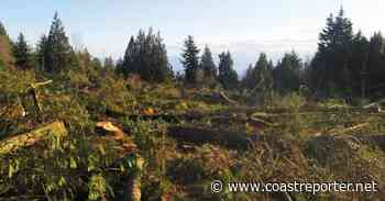 Gibsons moving forward with tree bylaw - Coast Reporter