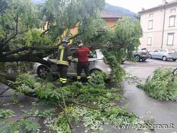 Sovere, albero cade su un'auto parcheggiata in piazza mercato - Araberara