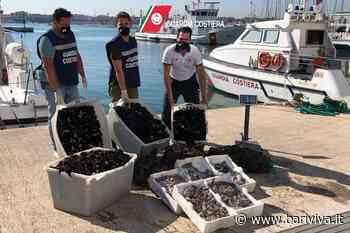 Provincia di Bari, giro di vite contro il commercio di pesce illegale. Scatta il maxi sequestro - BariViva