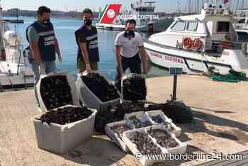 Bari, su furgoni abusivi 3 quintali di pesce senza tracciabilità: scatta il sequestro - VIDEO - Borderline24 - Il giornale di Bari