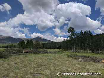 In a meadow outside Flagstaff, a restoration project will cut down trees to save a landscape