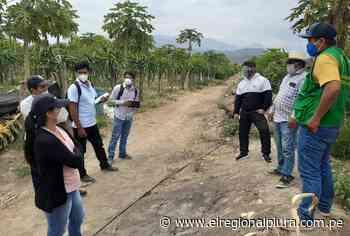Sullana: agricultores de Querecotillo iniciarán siembra de pitahaya - El Regional