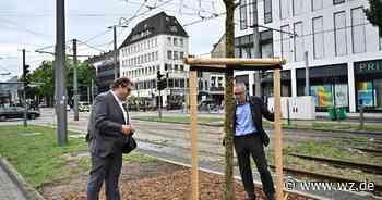 Wie sich Krefeld um seine Bäume kümmertNatur - Westdeutsche Zeitung
