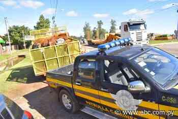 Arrean a animales sueltos en Mbocayaty - Nacionales - ABC Color