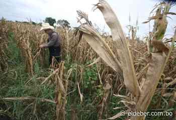La sequía daña un 85% de la producción agrícola en Yacuiba - EL DEBER