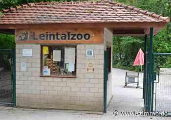 Bekommt Schwaigern einen Zoo-Kindergarten? - STIMME.de - Heilbronner Stimme