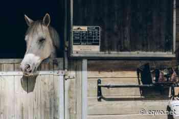 Stallmanagement – ein nicht zu unterschätzendes mentales Werkzeug | Equestrian Worldwide | Pferdesport weltweit - EQWO - Equestrian Worldwide