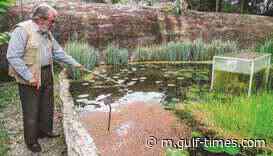 Gardener uses lockdown to save botanical paradise - Gulf Times