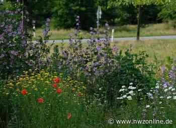 Insektenparadiese In Ganderkesee: Lebensraum im Gewerbegebiet - Nordwest-Zeitung