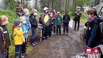 Hilchenbach: Kleine Naturdetektive erkunden den Wald - WR News