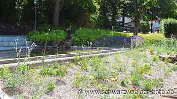 Niedereschach: Ortsbaumeister: Hochwertige Bepflanzung - Niedereschach - Schwarzwälder Bote