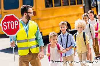 Collingwood's crossing guard program not feasible as is, say staff - CollingwoodToday