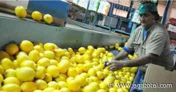 Se define el lunes continuidad de exportaciones de limones a la Unión Europea - AgriTotal