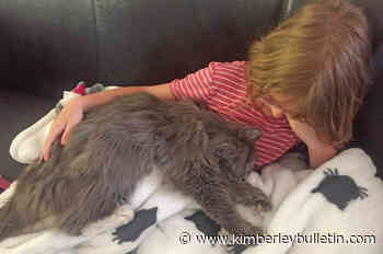 Birthday wishes come true as Kimberley girl reunited with her cat - Kimberley Bulletin