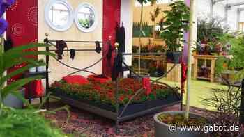 Kamp-Lintfort: Rosenvariationen in der Blumenhalle - GABOT