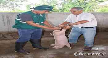 Minagri realiza en Pampa Hermosa masiva campaña de vacunación a ganado vacuno - Diario Correo