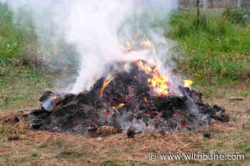 BCWS plans for woody debris burning in Esler area near Williams Lake - Williams Lake Tribune