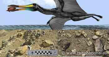 Descubren restos fósiles de reptil volador en Zapatoca, Santander - http://www.radionacional.co/