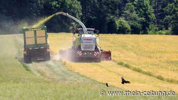 Vielerorts zu trocken fürs Getreide: Cochem-Zells Landwirte rechnen mit durchwachsener Ernte - Rhein-Zeitung