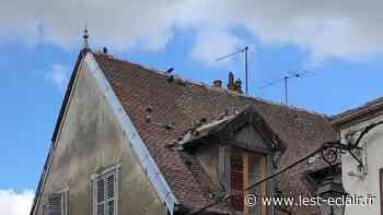 Une opération de lutte contre les pigeons à Nogent-sur-Seine - L'Est Eclair