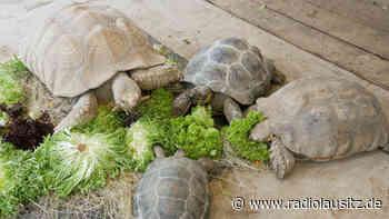 Zuwachs in der Schildkröten-WG im Zoo Hoyerswerda - Radio Lausitz