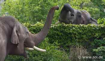 Neunkircher Zoo bekommt zwei neue Elefanten aus Leipzig - sol.de