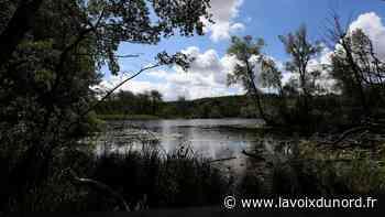 À Beuvry, au domaine de Bellenville, nature rime avec poésie - La Voix du Nord