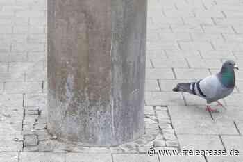Neue Polizeiverordnung: Nicht nur Tauben geht's ans Gefieder - Freie Presse