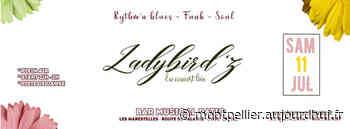 Concert /Show LadyBird'z - Bar Musical Patio , Lattes, 34970 - Sortir à Montpellier - Le Parisien Etudiant