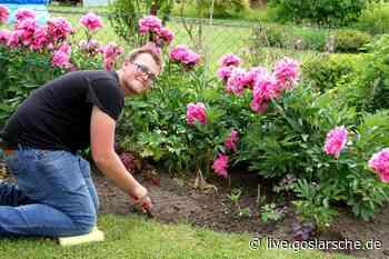 In der Coronakrise sind Kleingärten gefragt | GZ Live - GZ Live