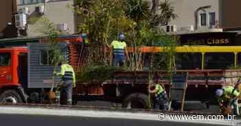 Após derrubada de árvores, Contagem lança programa de plantio de mudas - Estado de Minas