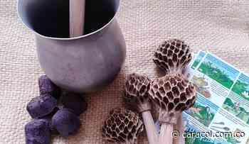 Así salvaron las magnolias y la costumbre de batir chocolate con molinillo - Caracol Radio