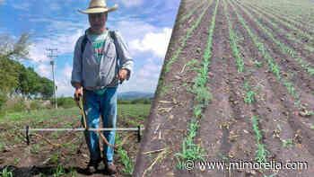 Numarán y Zacupu suman más hectáreas a la Agricultura Sustentable - MiMorelia.com