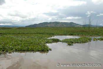 Procuraduría vigilará a quienes viertan aguas residuales a la Laguna de Fúquene - ElEspectador.com