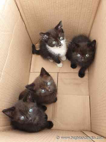 Animals in Need Donegal preparing for increase in demand of services - Highland Radio