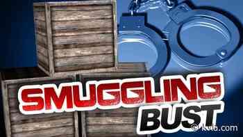 El Paso man pleads guilty to smuggling live animals worth millions across border - KVIA El Paso