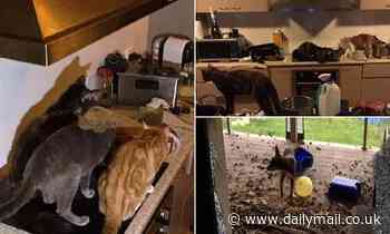 Couple who kept 35 animals in their faeces-ridden home are forced to pay $18,000 in vet bills - Daily Mail