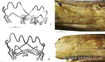 Archaeology: Ancient artwork discovered in Siberia are 'earliest EVER drawings of animals' - Express.co.uk