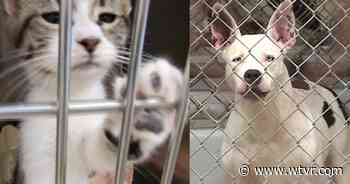 How you can help the animals at this struggling Virginia shelter: 'We're trying' - wtvr.com